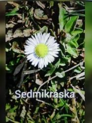 Sedmikráska_Míša
